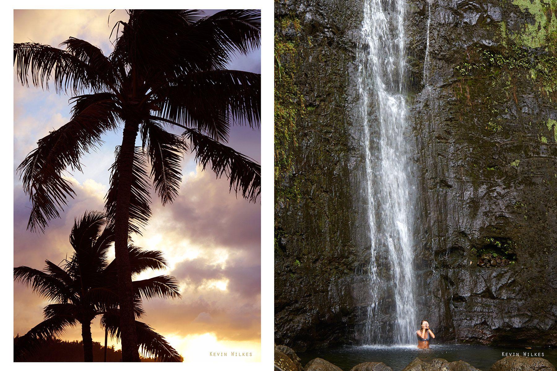 Palms. Manoa Falls. Oahu.