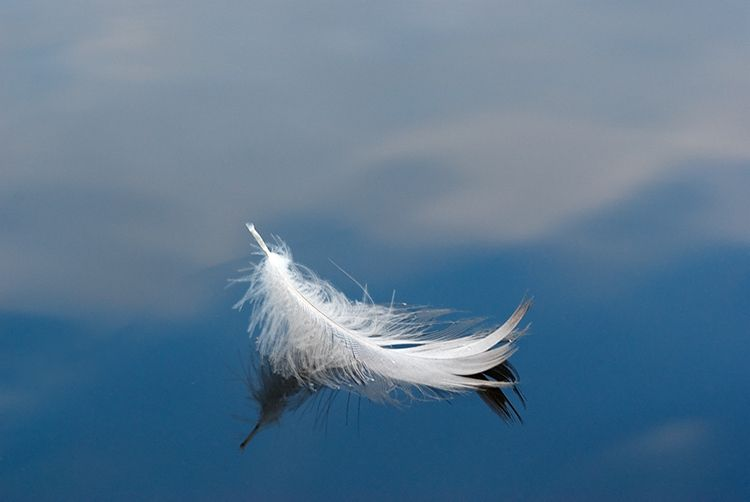 white feather floating on water