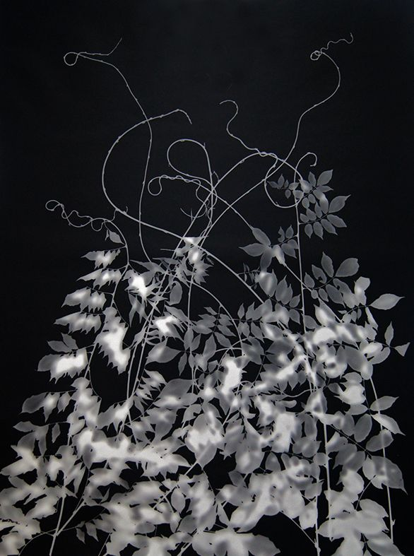 photogram July 2019.jpg