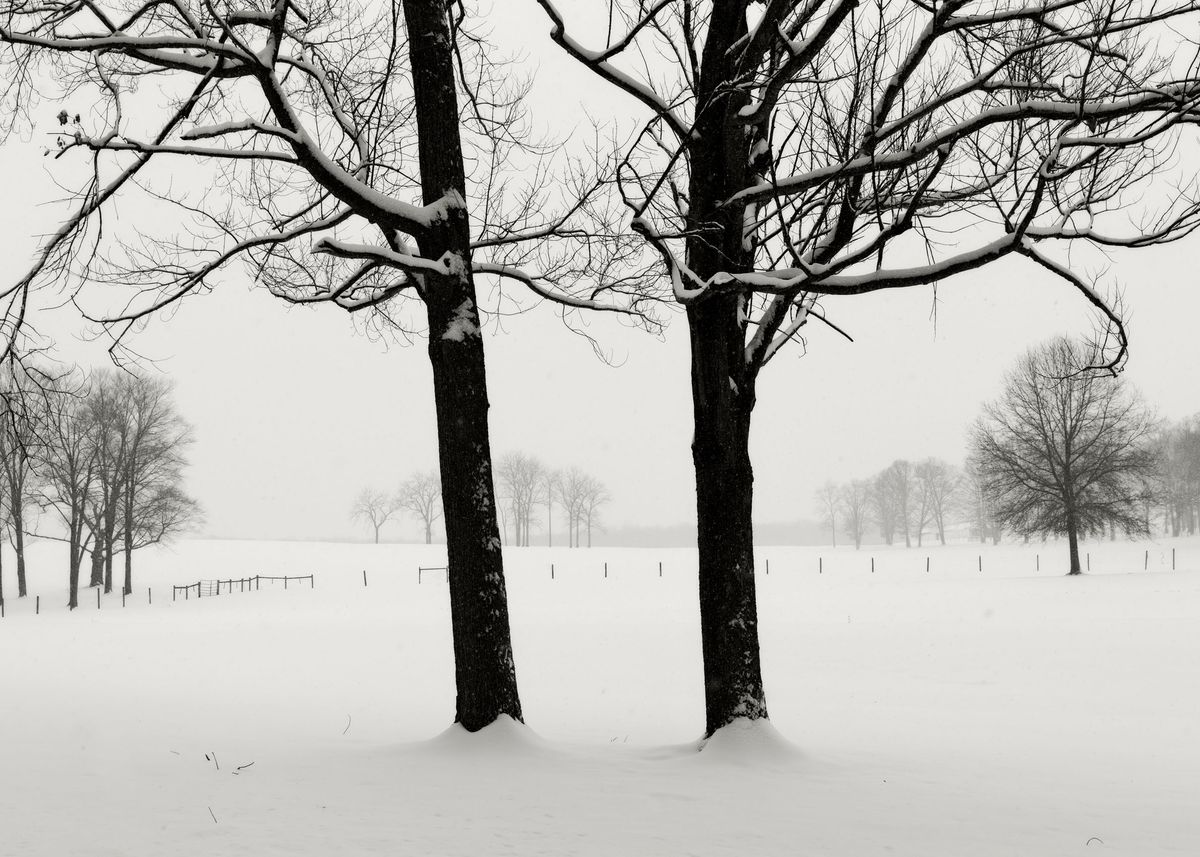 Winter_5x7_13.jpg