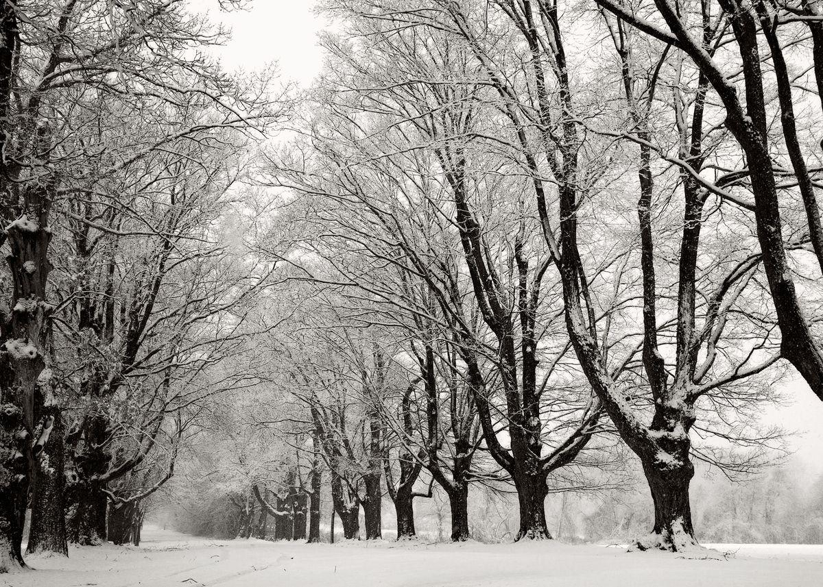 Winter_5x7_04.jpg