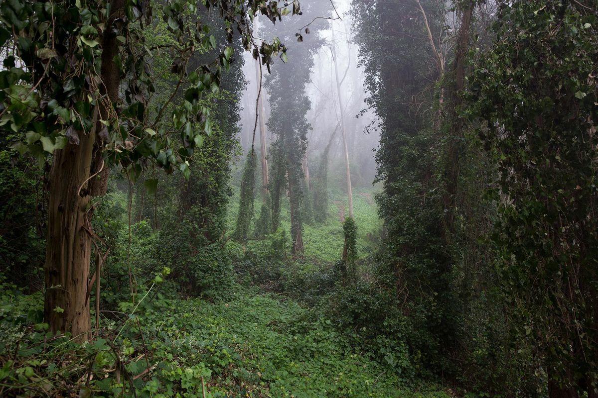 Sutro Forest #2