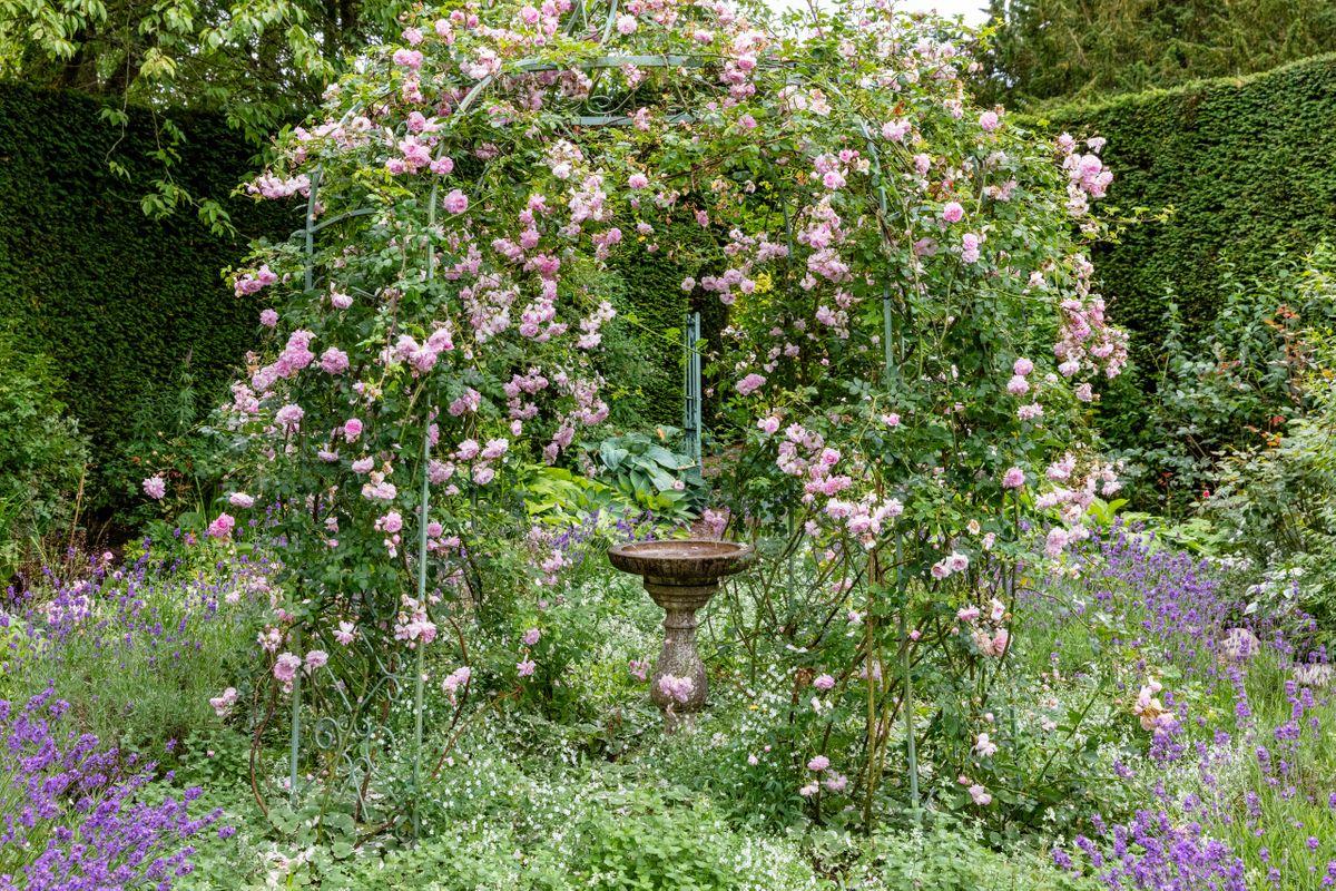 Rose Covered Pergola
