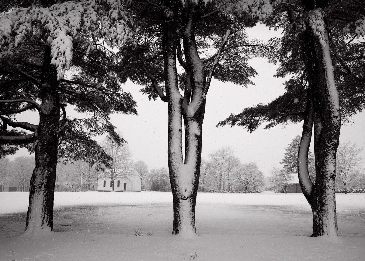 Winter_5x7_01.jpg