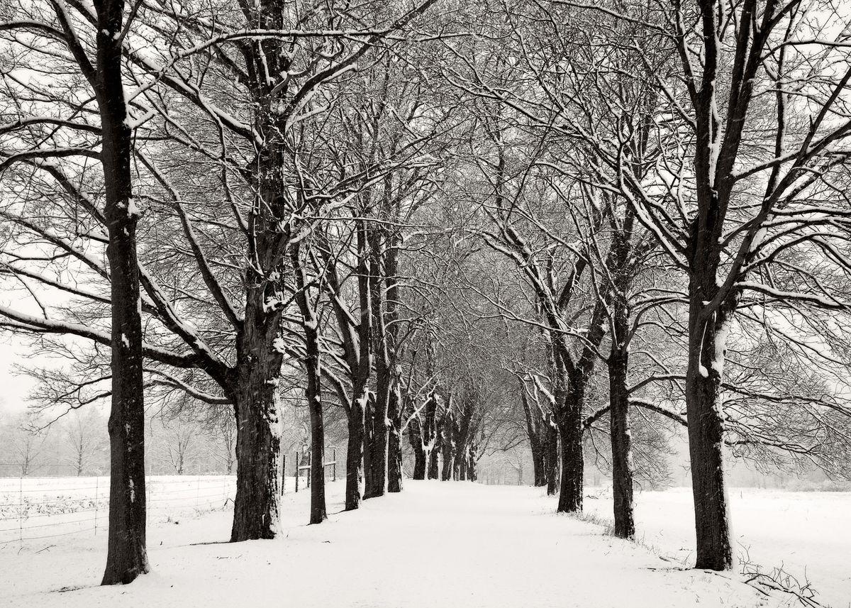 Winter_5x7_05.jpg