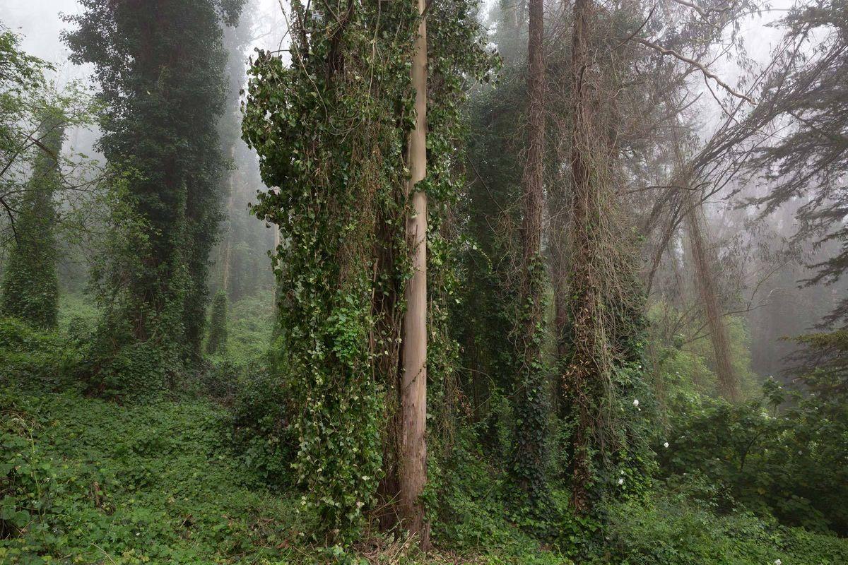 Sutro Forest #1