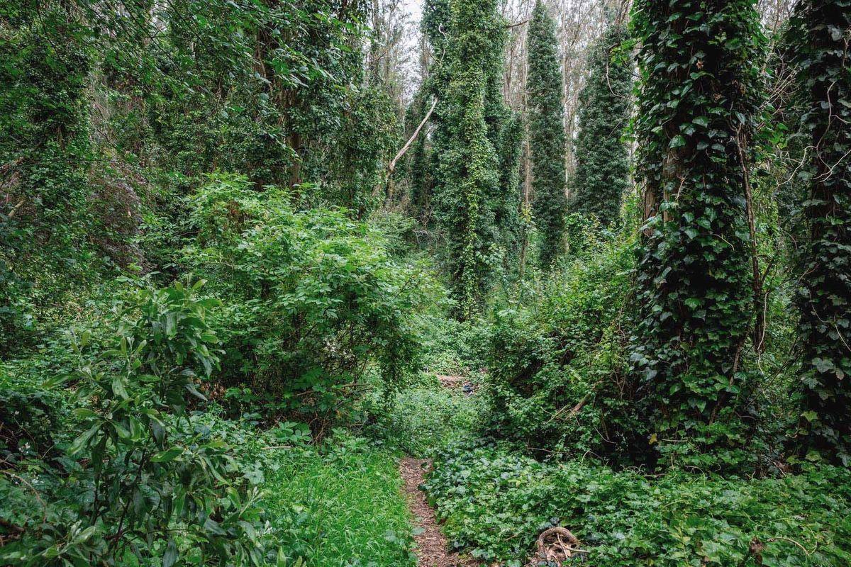 Sutro Forest #4