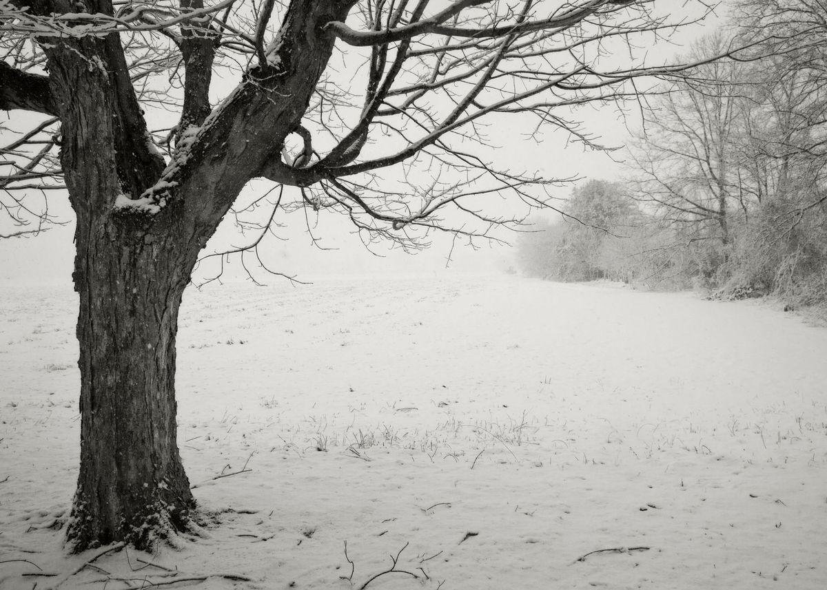 Winter_5x7_06.jpg