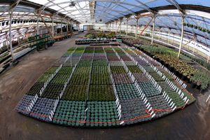 SSLPhoto_SucculentGardens_April2012_ (2045 of 2612).jpg