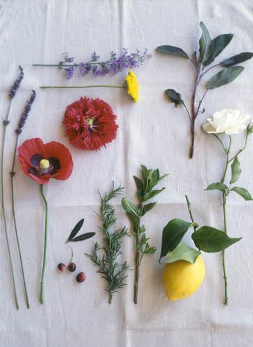 17_0_115_1AHom_flower_cloth.jpg