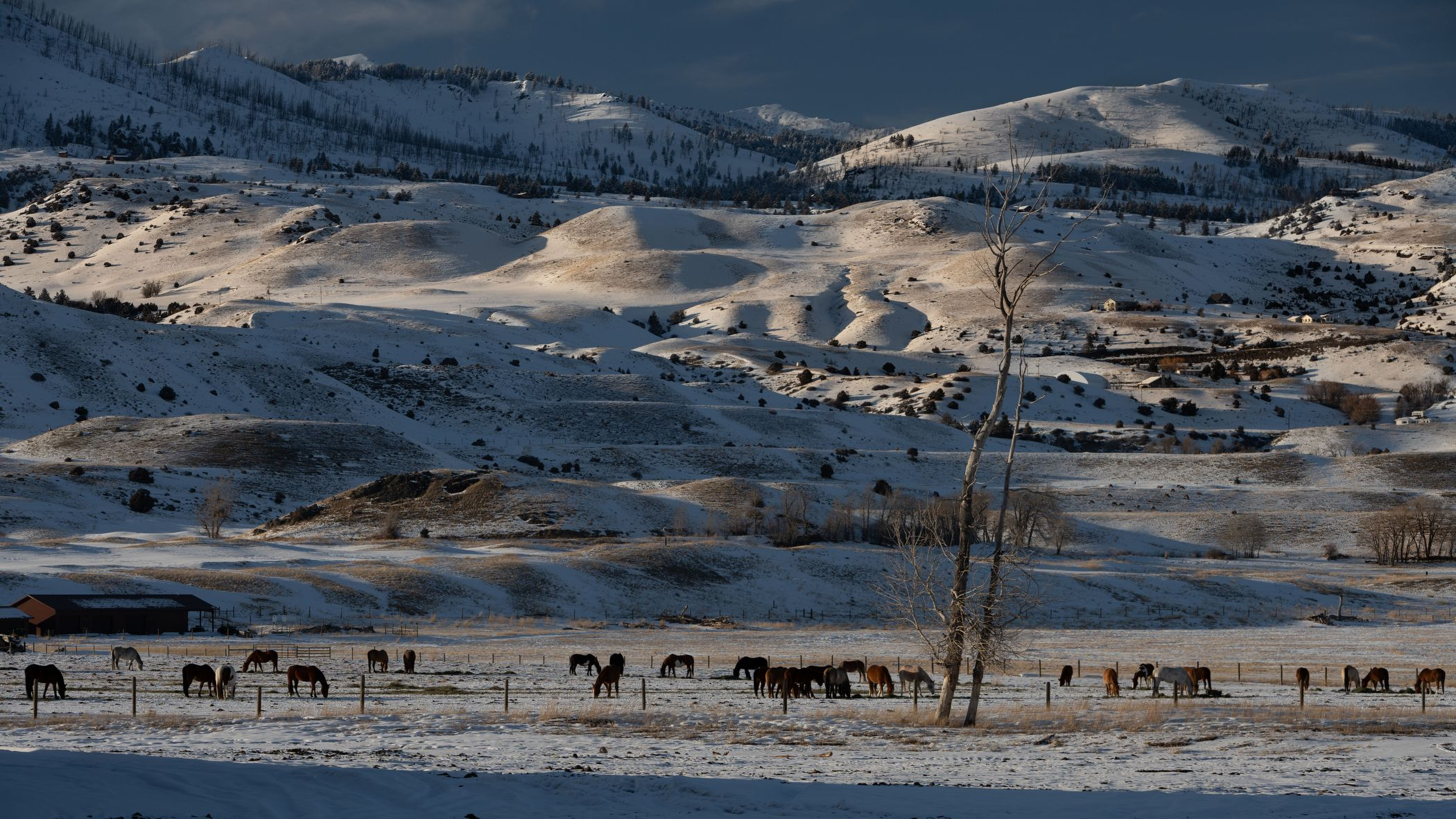 Snow capped Montana Pasture and Mountains