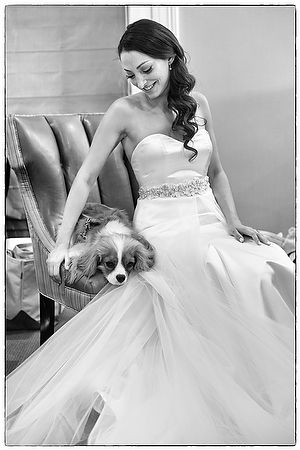 A Tappan Hill Bride and King Charles Puppy