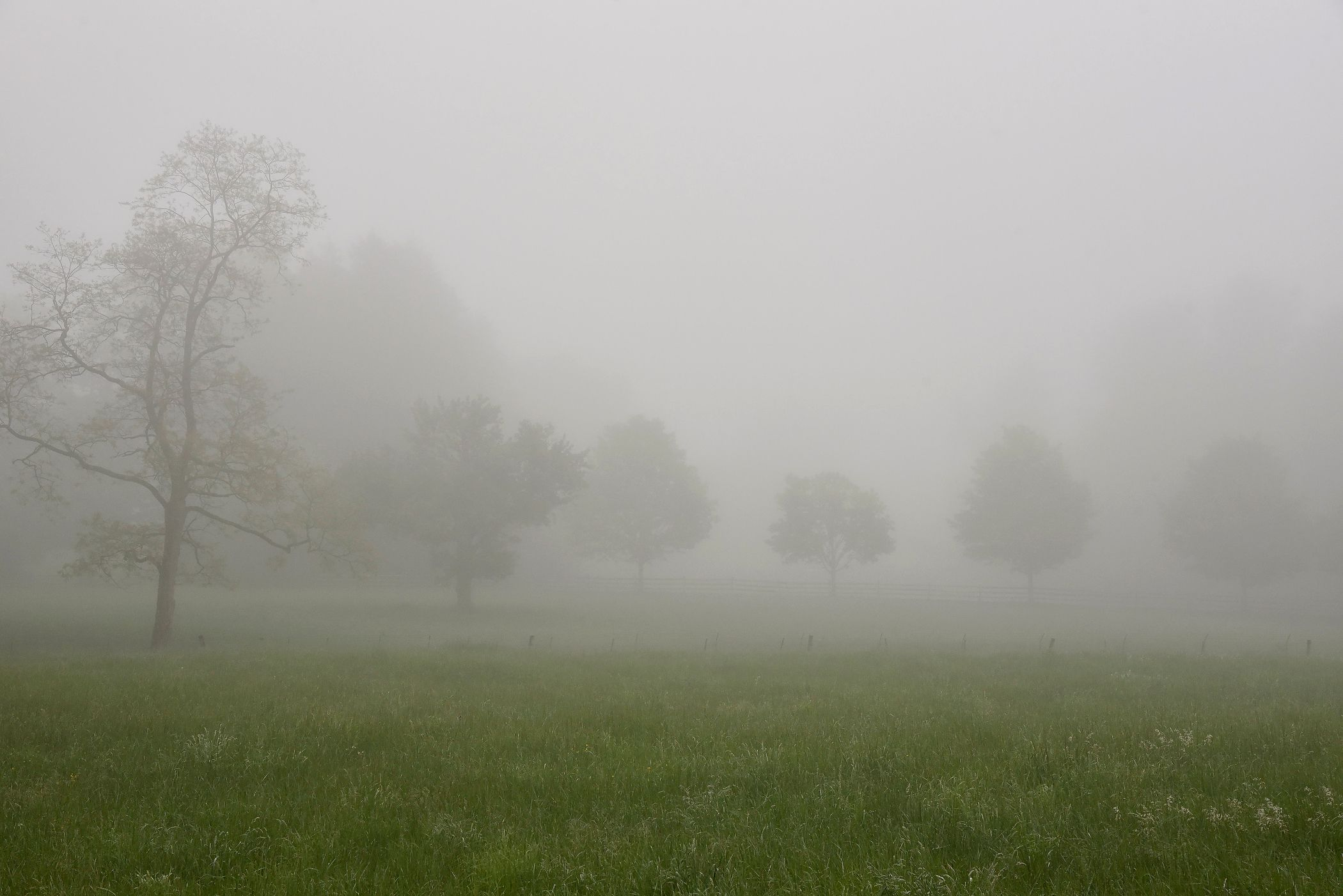Mist Over The Pasture