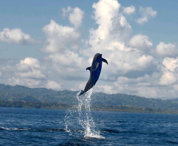 dolphins_04.jpg