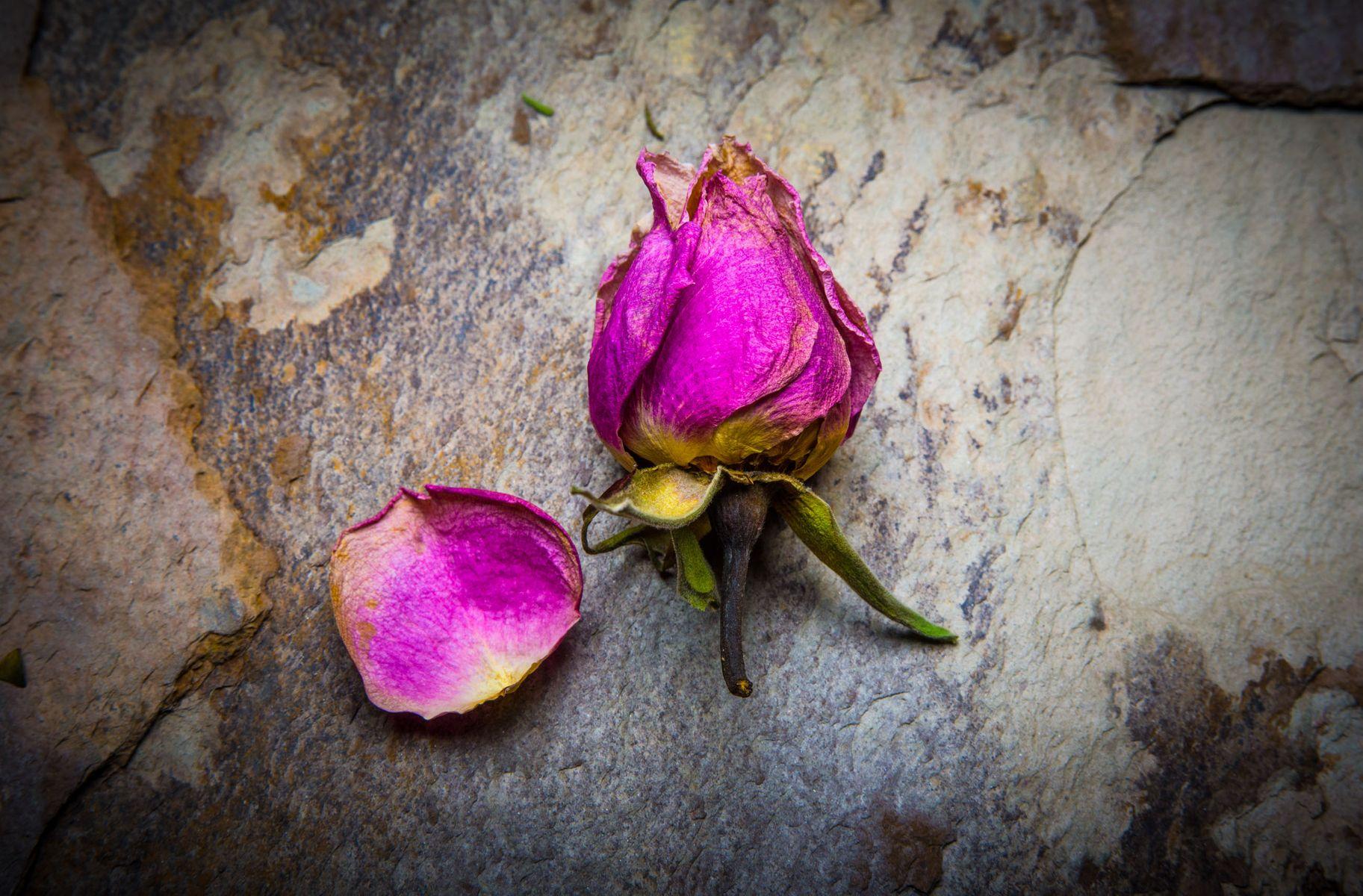 dry_roses-10.jpg