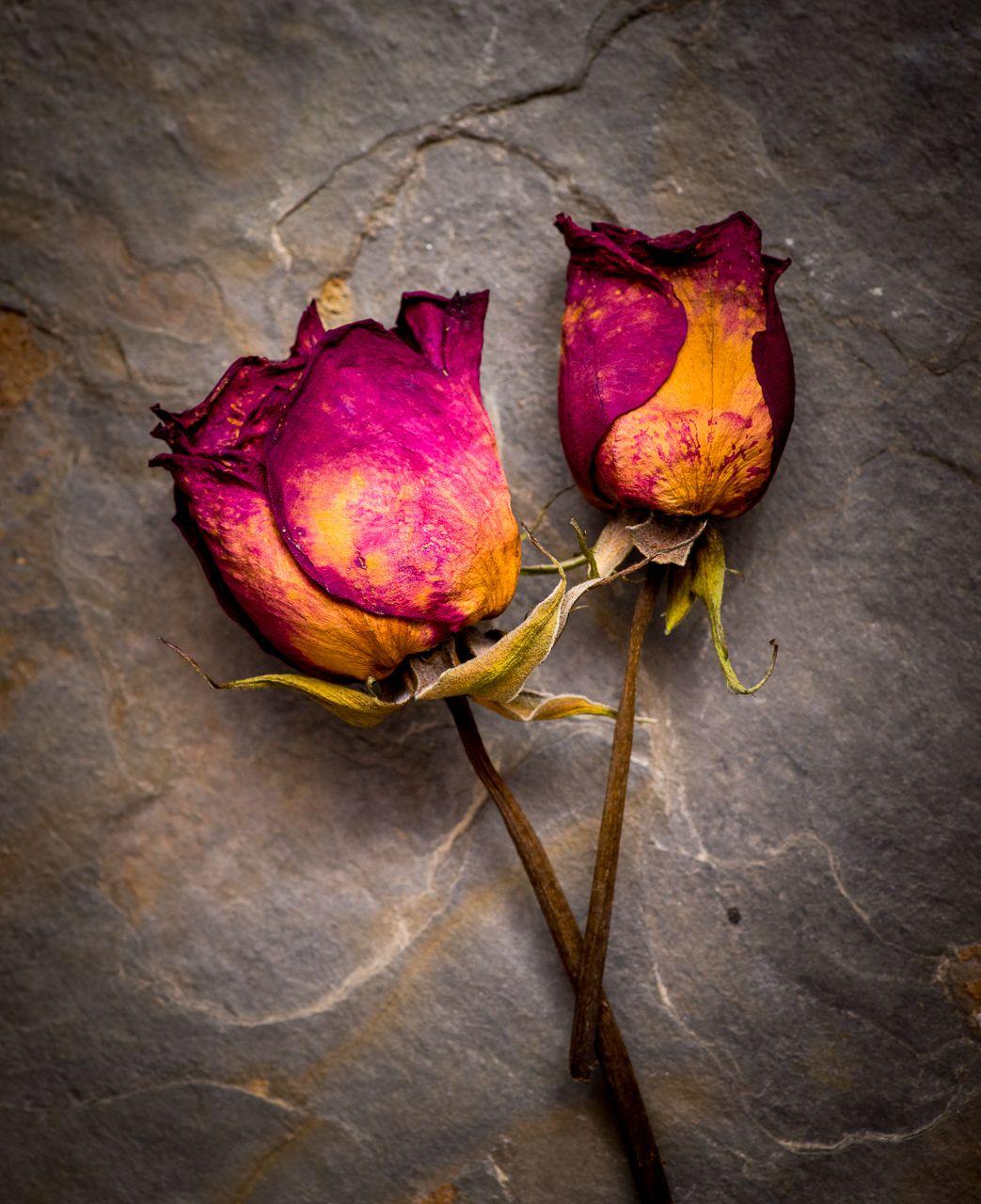 Dry Rose-2.jpg