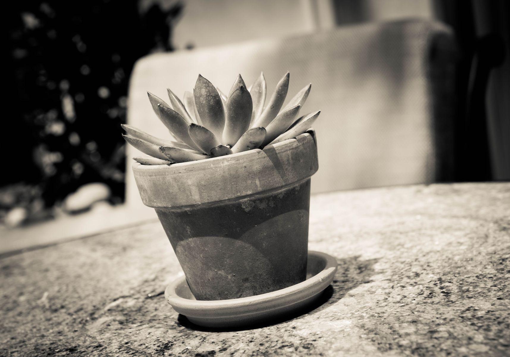 1508_Succulent_.jpg