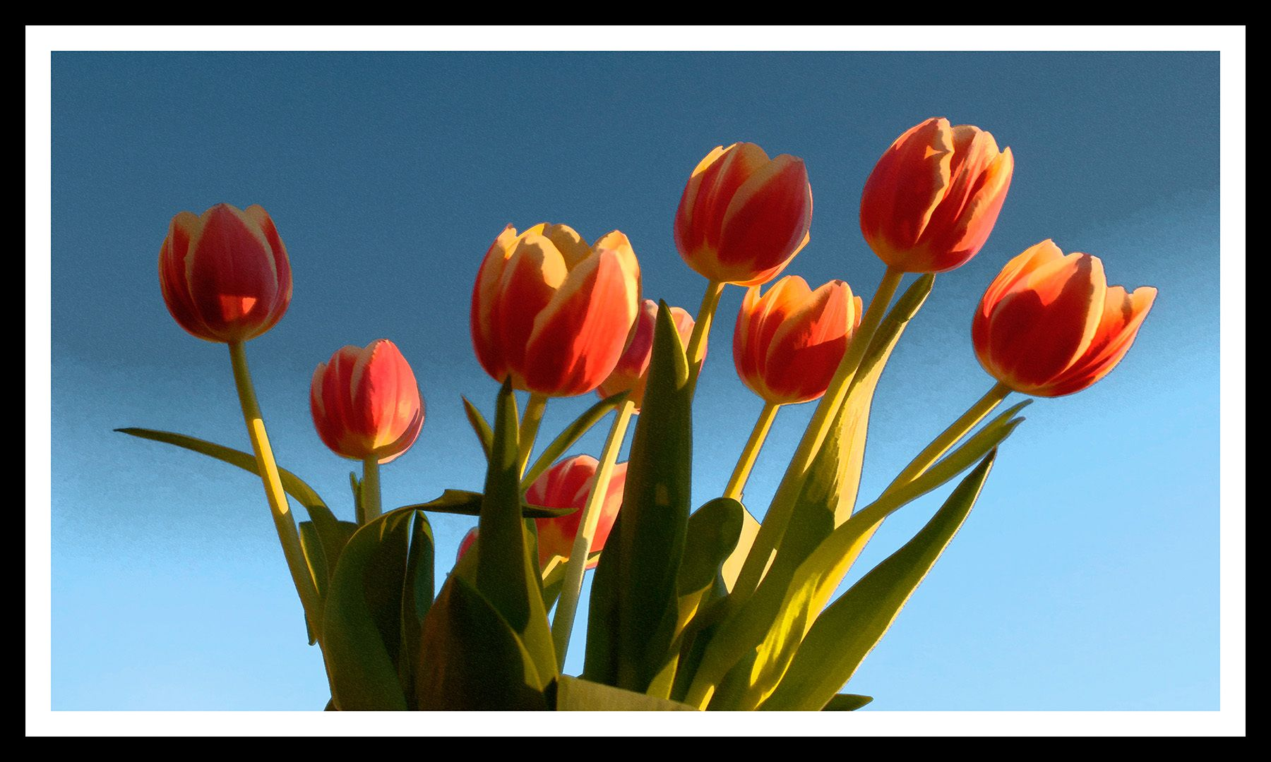 Tulips of April