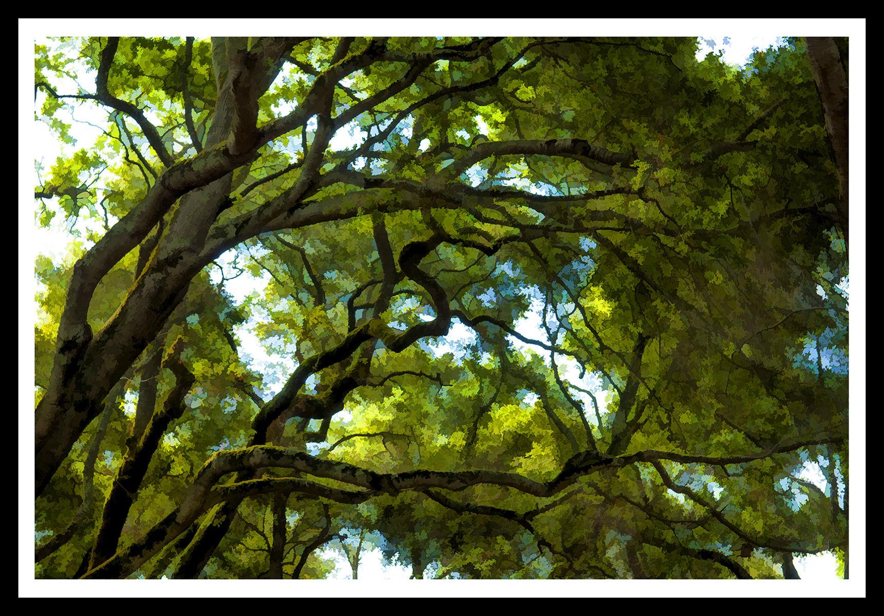 1omr_trees_1.jpg