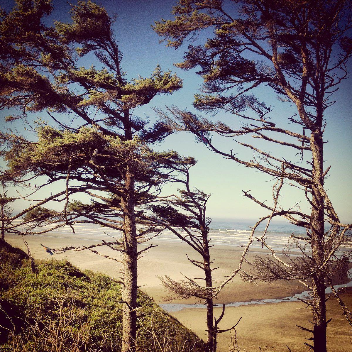 1seabrooke_oregon_instagram_coastal_trees.jpg