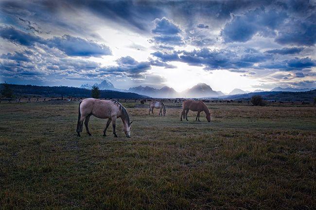 JH_horses.jpg