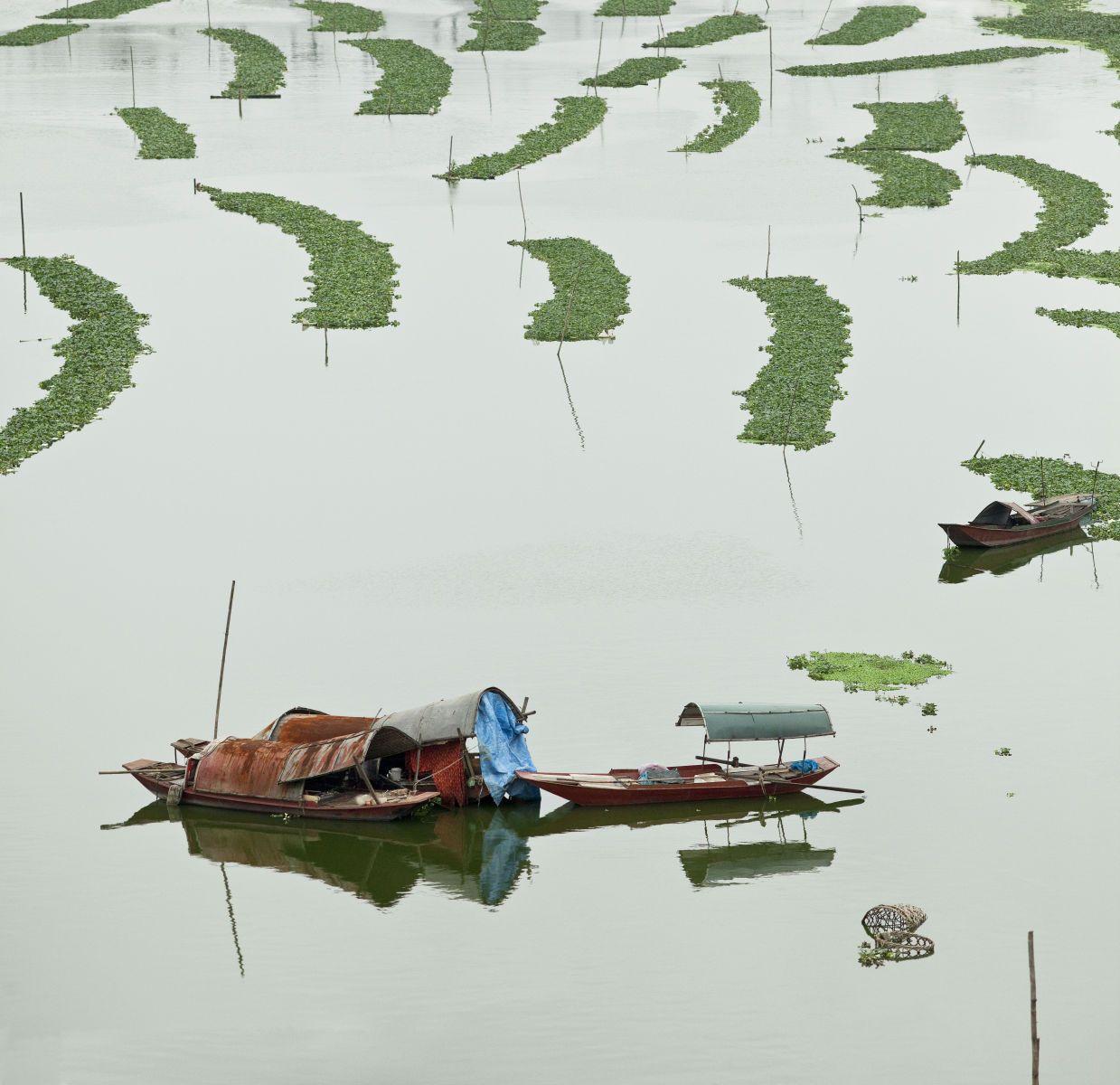 Kelp Farming, Hanoi