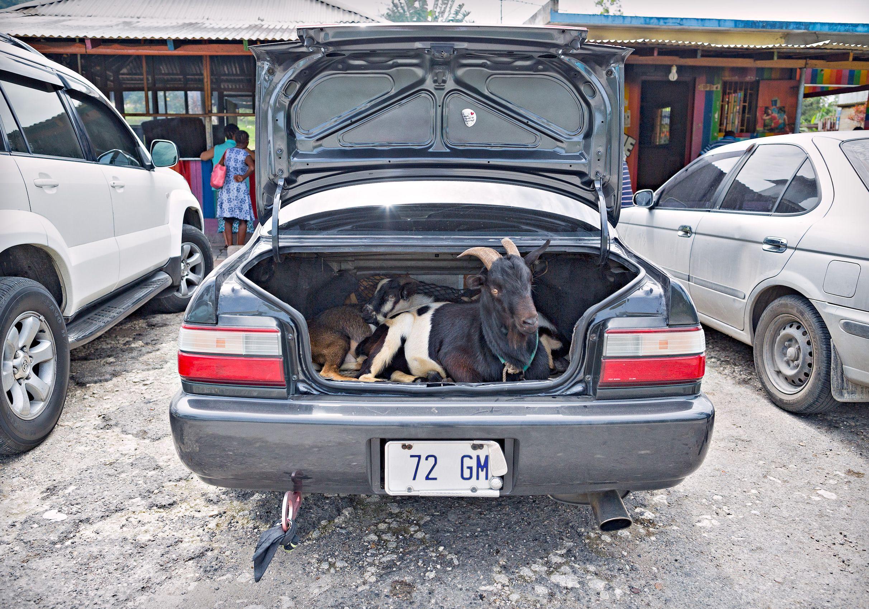 A2815-Trunk-Goats.2-psd-20-50.jpg