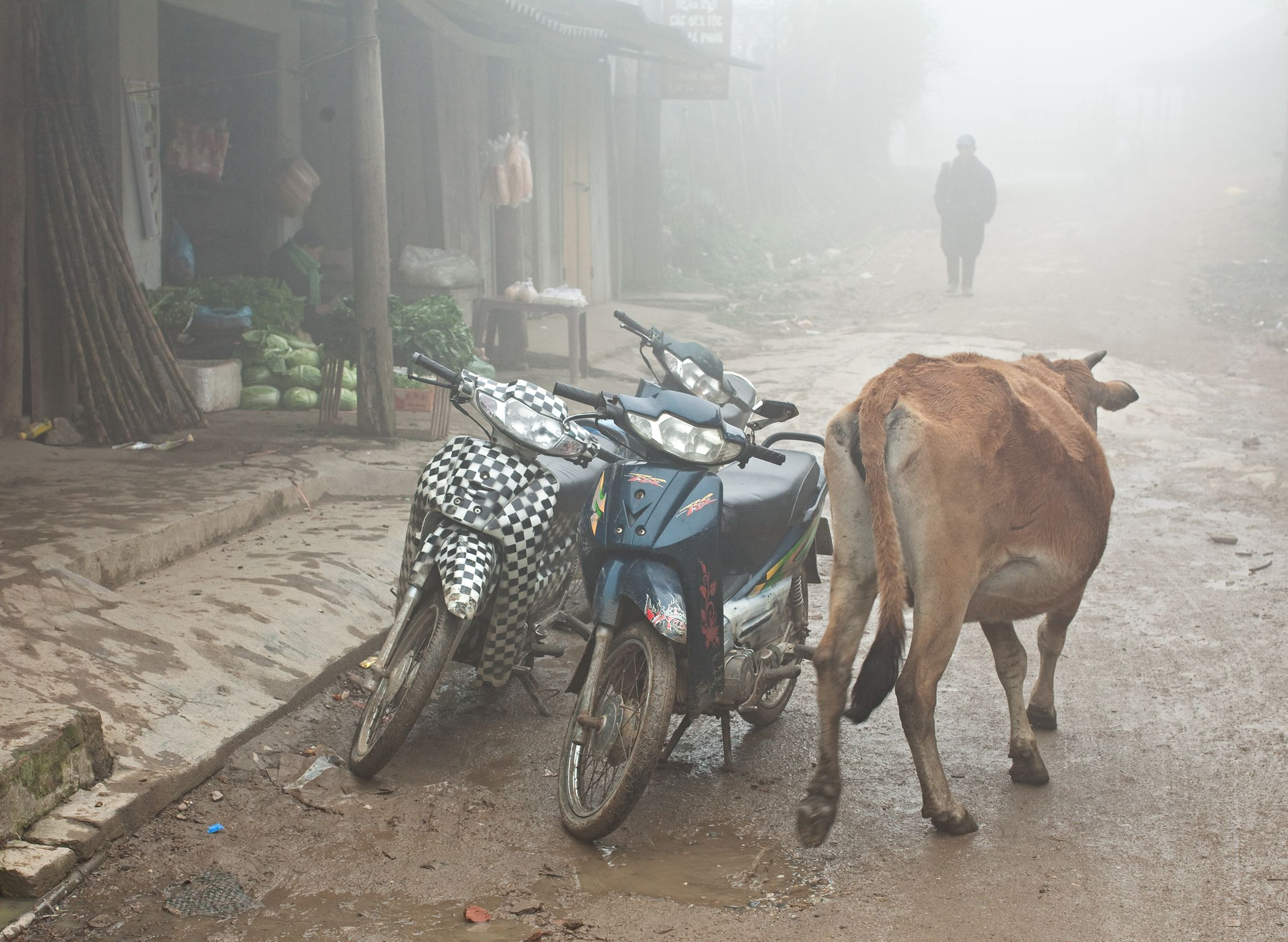 8932-Cows-and-Motorbikes_Red-Dzao.jpg