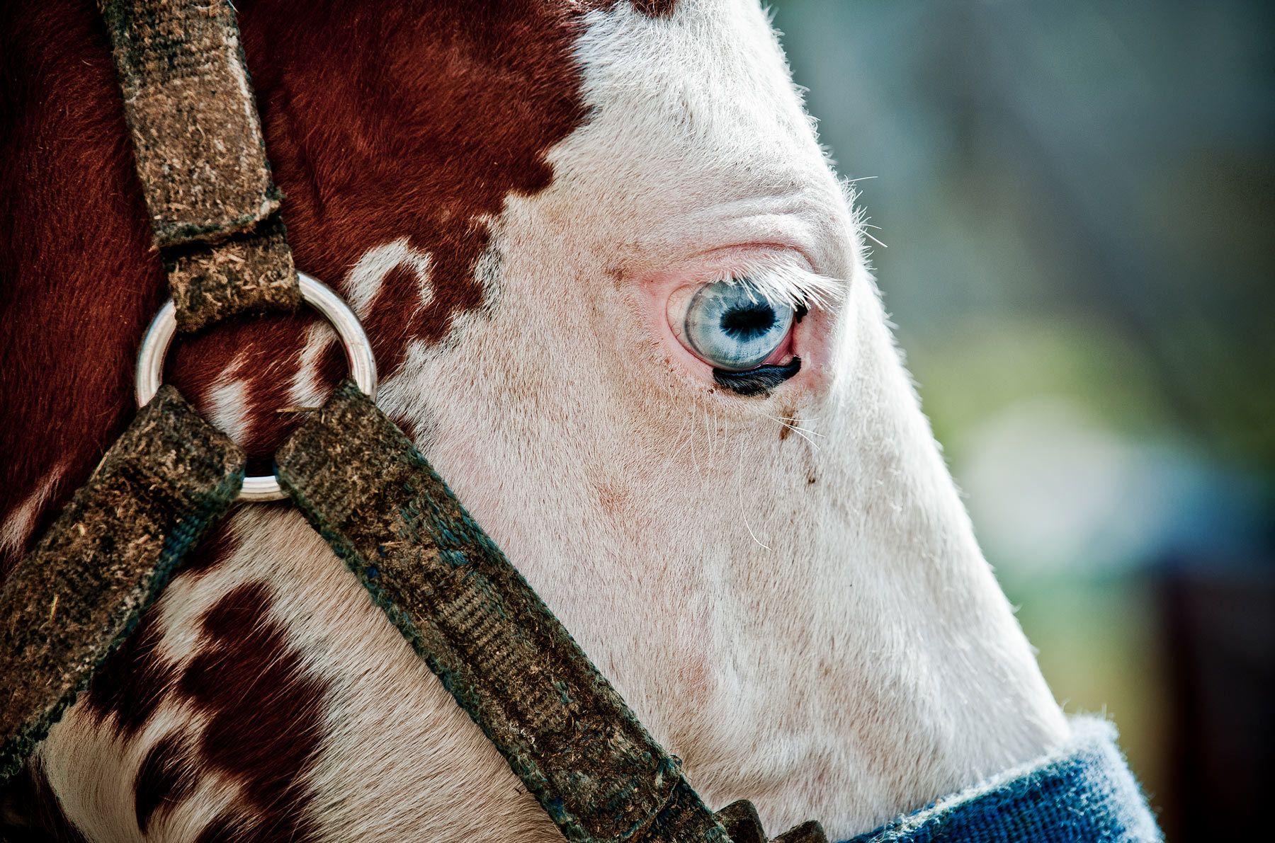 foals eye