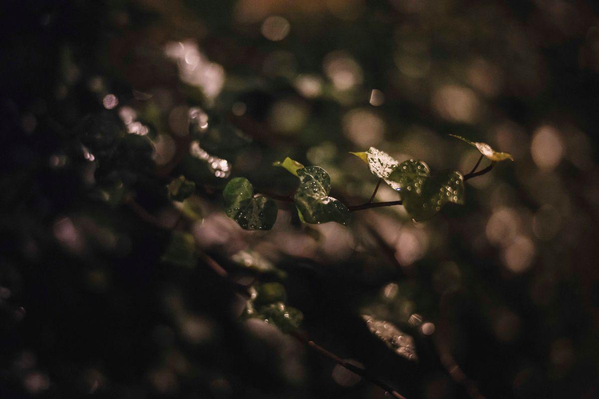 dark camden1.jpg