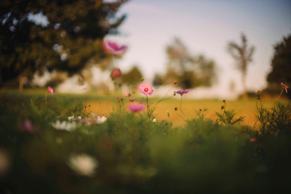 meadow nocti1.jpg