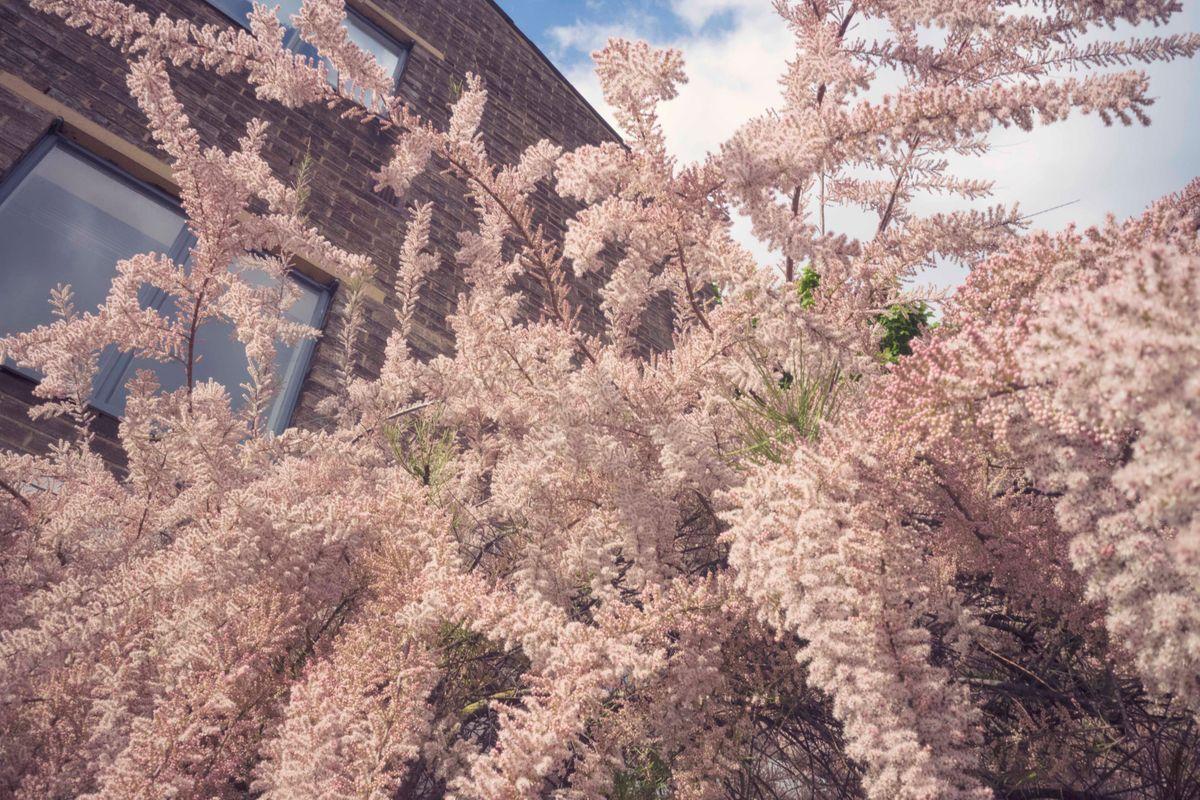 spring tree1.jpg