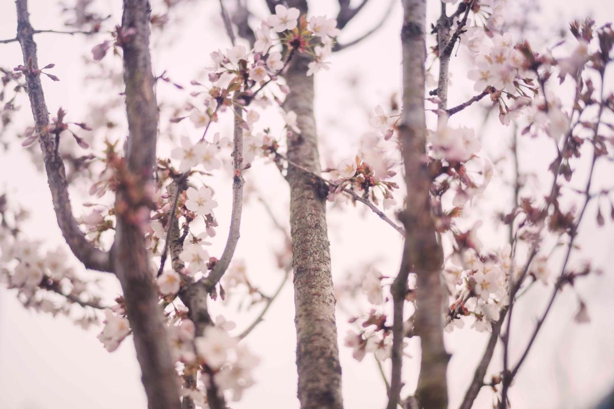 blosson1.jpg