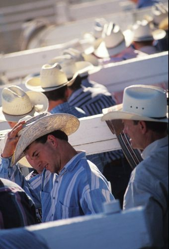 cowboys in chute
