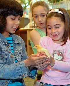 My Little Chickadee - Horace Mann School