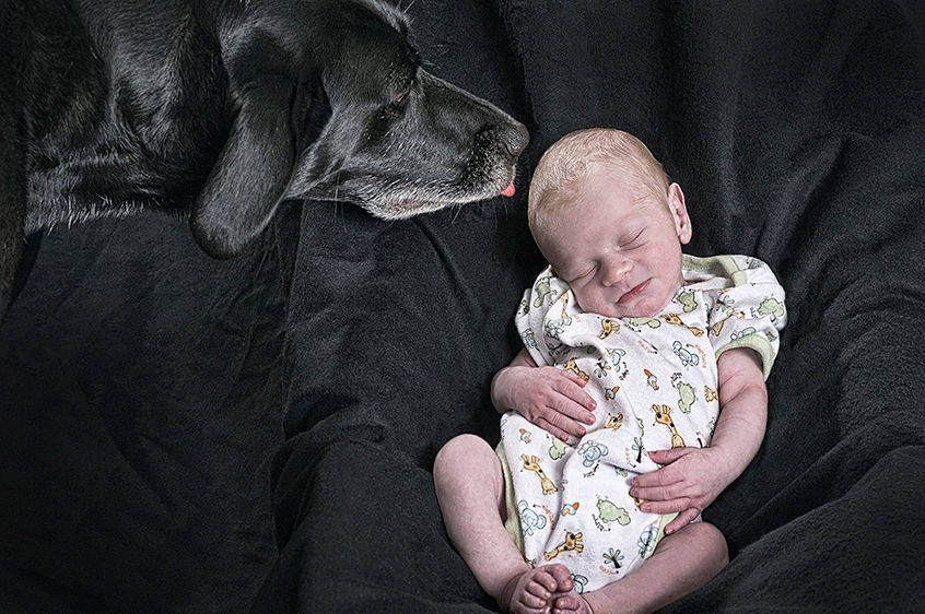 Dog Kissing an Infant