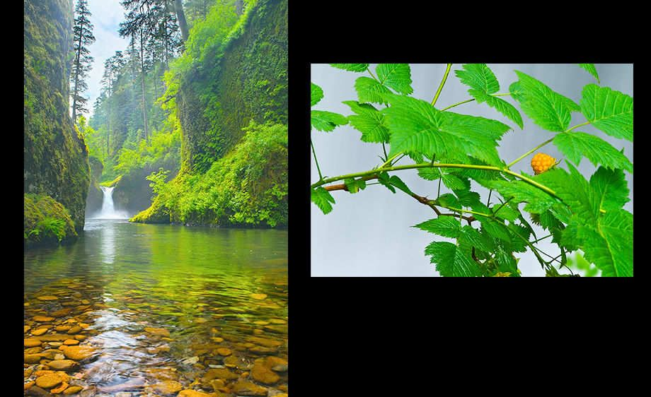 Eaglec Creek and Salmonberry Panel - Columbia River Gorge, Oregon