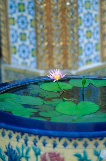 1Thailand_royal_palace_planter_lotus
