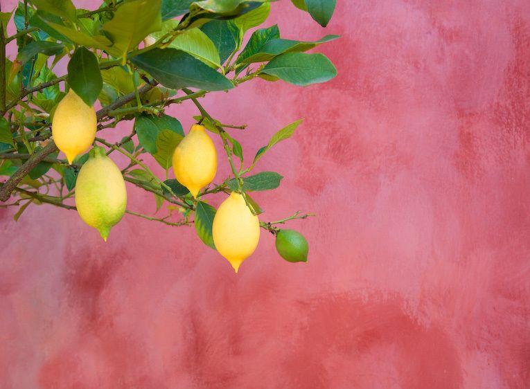 1Italy_Toscany_lemons
