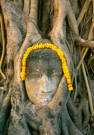 1thailand_attuyata_buddhain_tree_