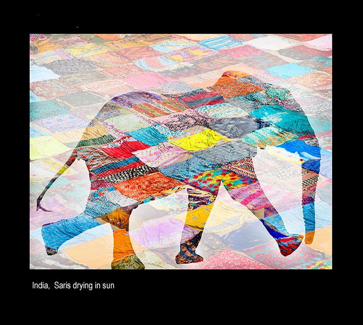 maialoa elephantfcd3.jpg