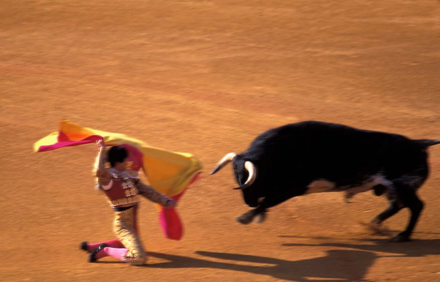 1bull_fighter_idiot
