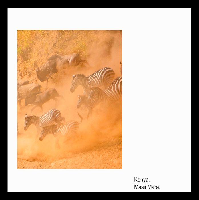 mail111   Kenya Migration Masai Mara.jpg