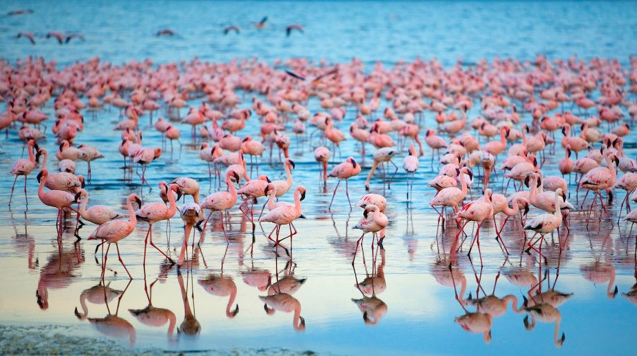 1Kenya_Flamingoes_Lake_nakaru_3