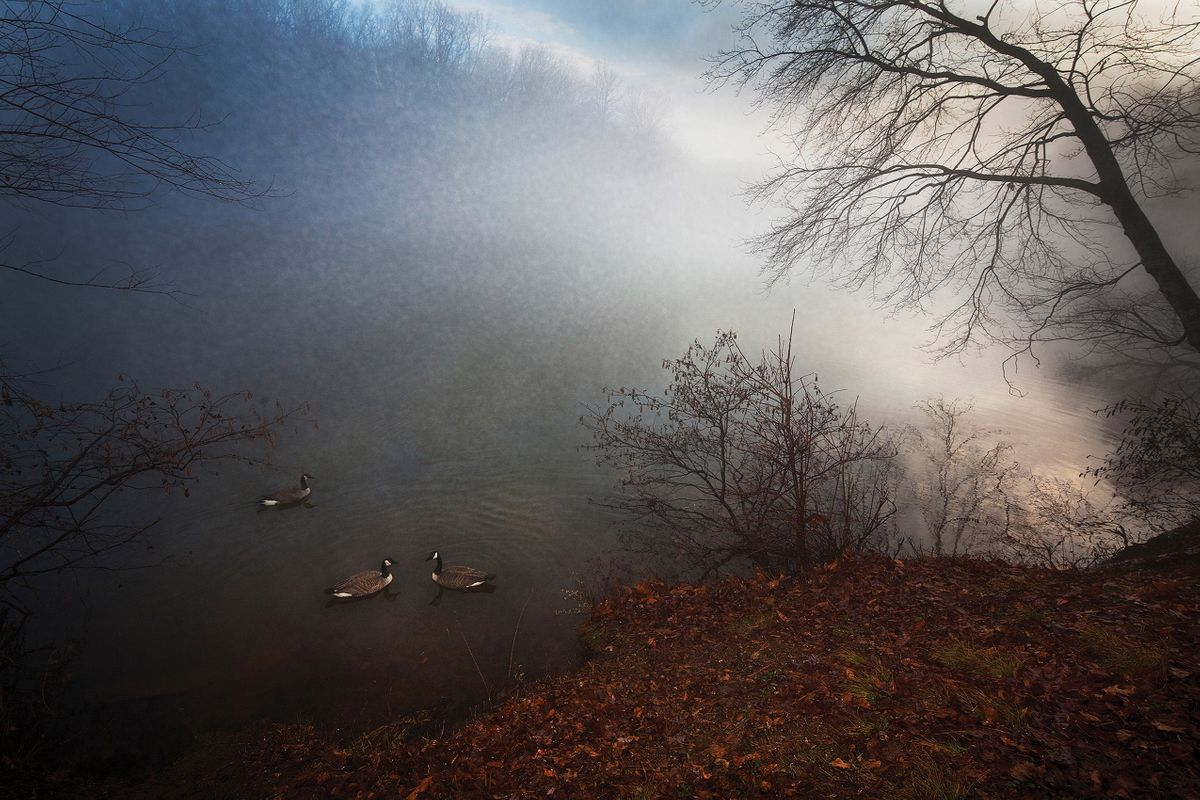 Geese_Mist_#2_NEW.jpg