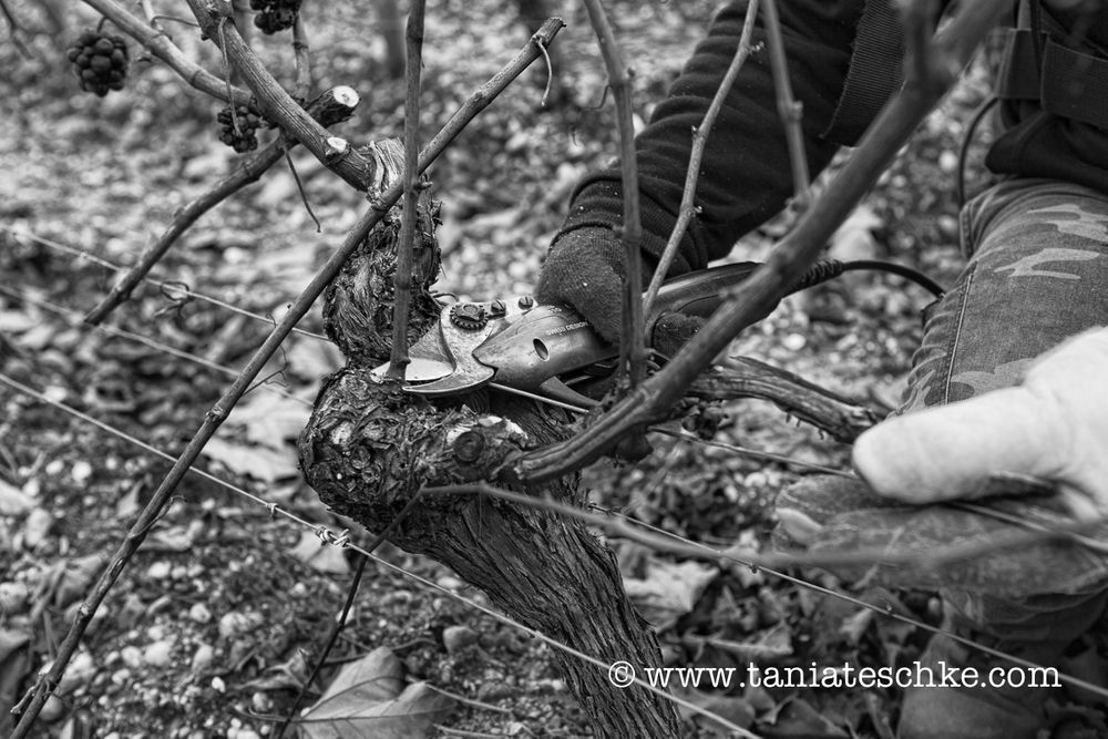 1carbonnieux_pruning_1397_edit