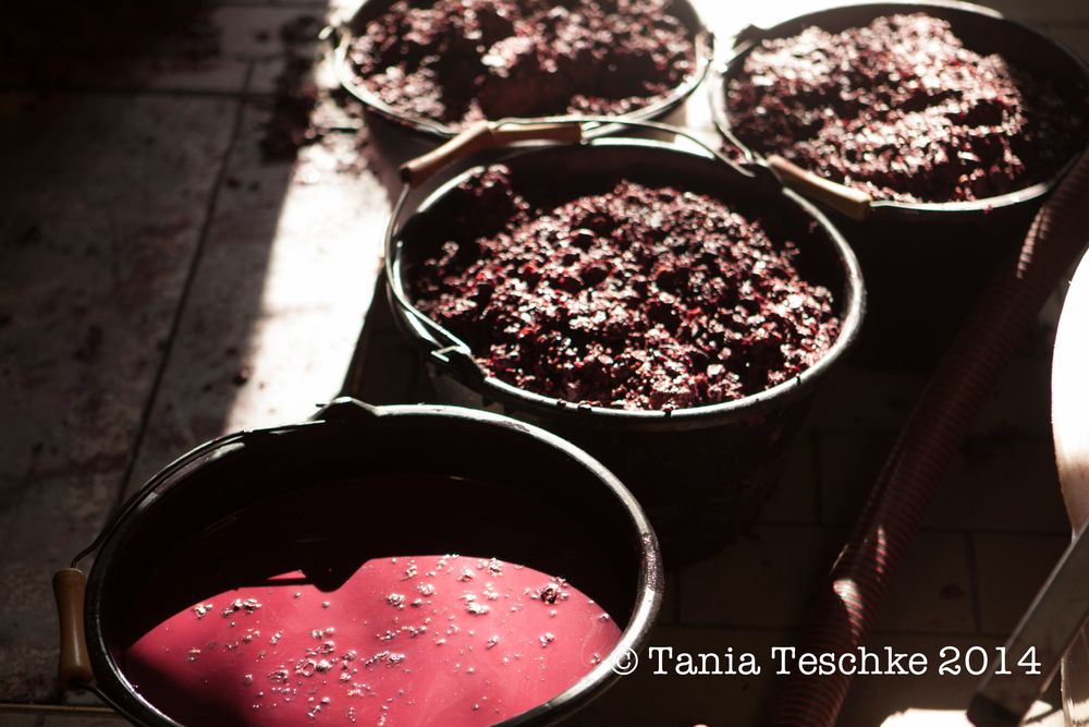1tania_teschke_photography_ch_guadet_red_press_0281