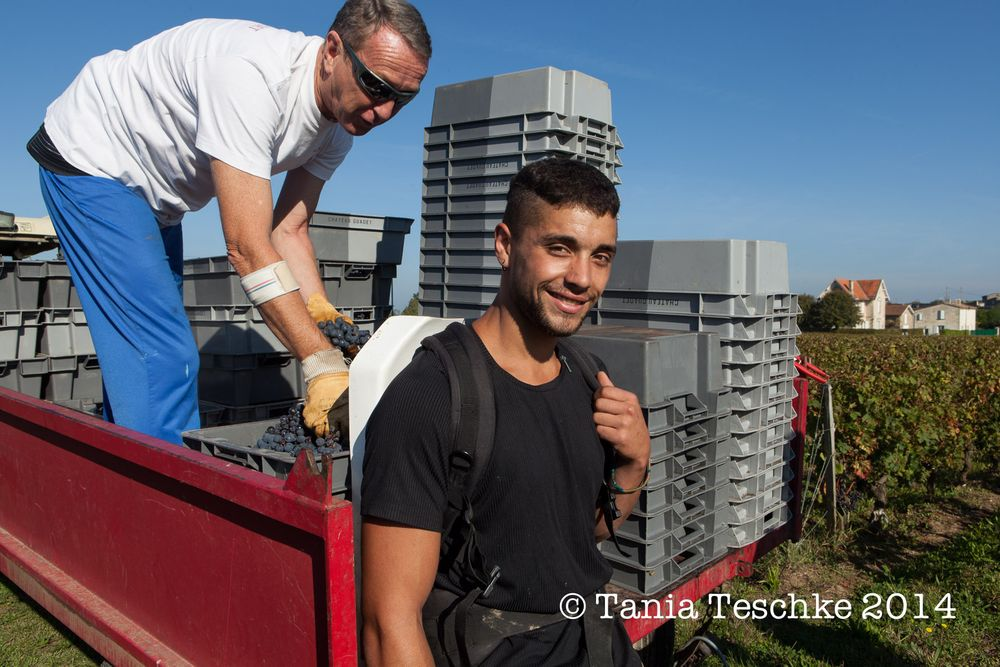 1tania_teschkee_photography_chateau_guadet_vendanges_2014_day_1_8714