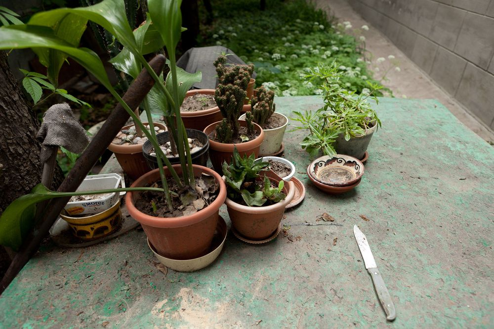 1almaty_plants_knife_on_table