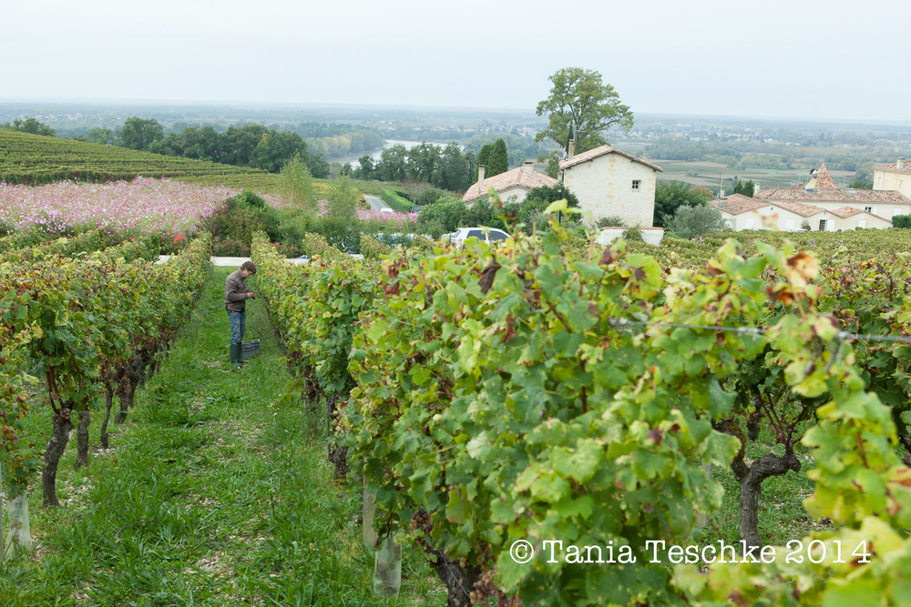1tania_teschkee_photography_biac_sweet_vendanges_9481